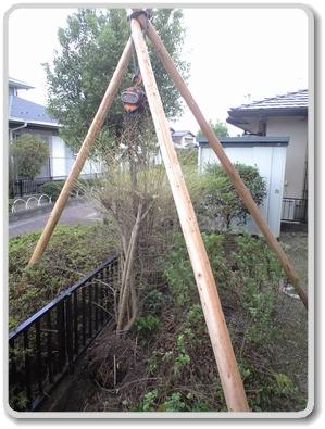 プリペットの伐根作業状況