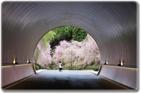 メイン通路のトンネルから見る枝垂れ桜
