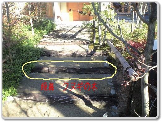 玄関への階段、アプローチ 段鼻 クヌギの木 撤去前